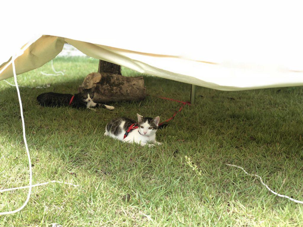 雨の日のための共有スペースのテントをふれあいコーナーに