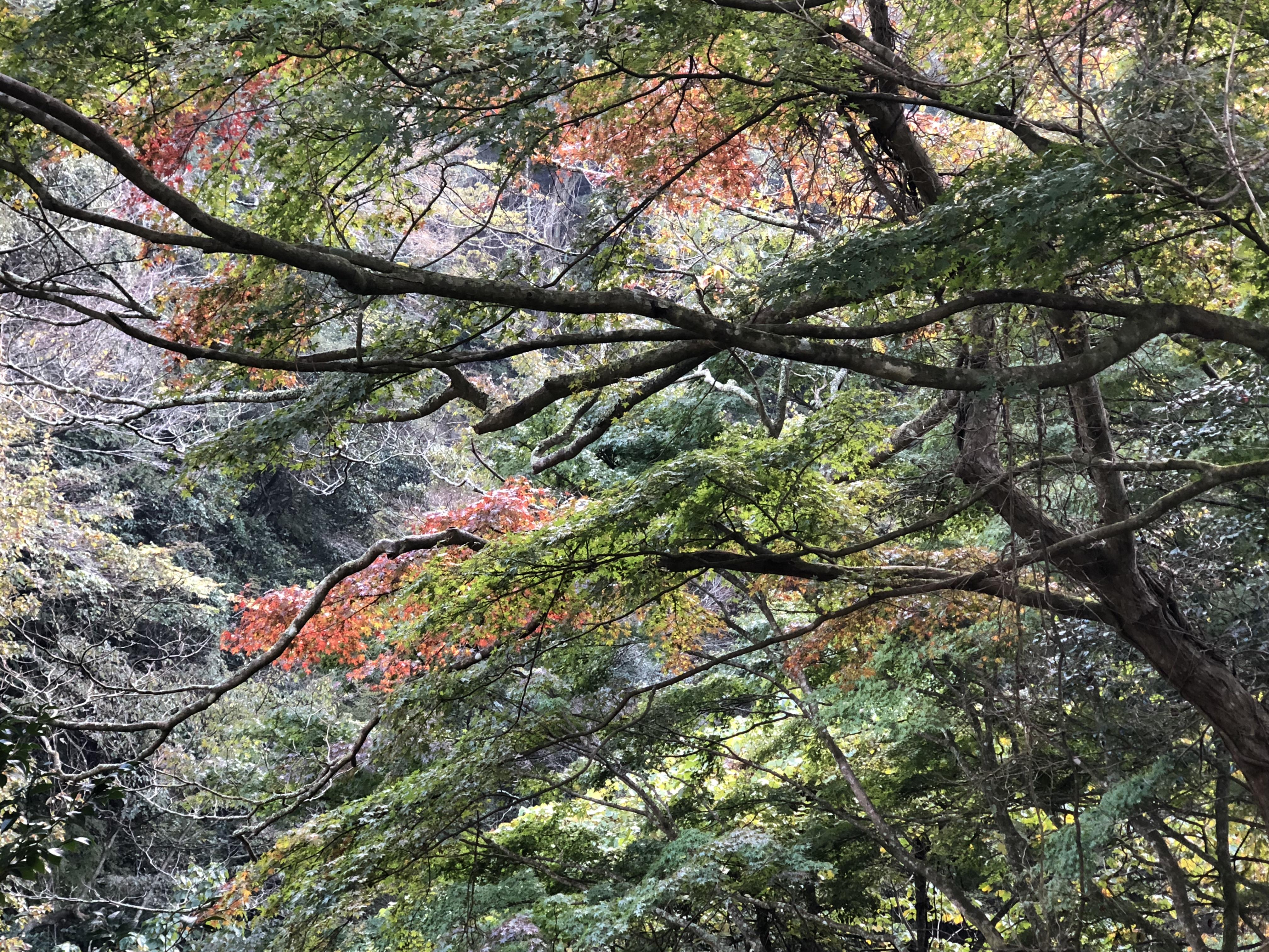 冬対策強化と紅葉シーズンに向けて